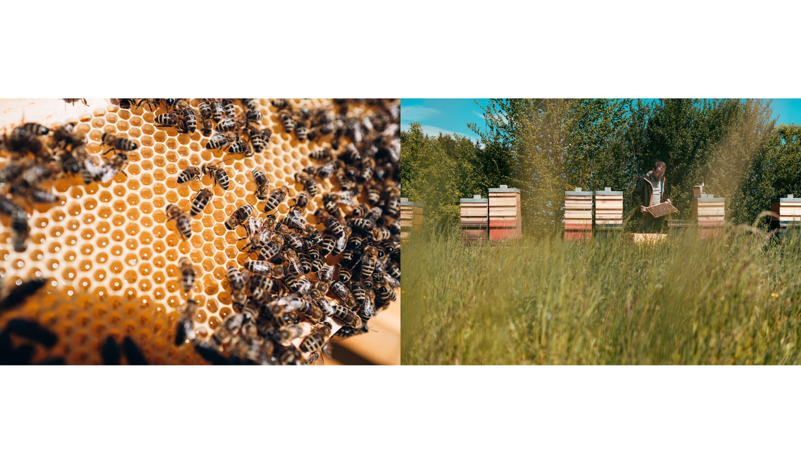 Photograph Landwirtschaft nachhaltig Höfe Bio Fotos